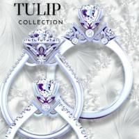 Tulip Collection